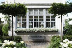 Symmetrical white garden with long window box