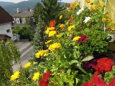 Így varázsolj édenkertet az erkélyből | Balkonada Plants