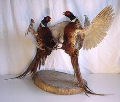 pheasant - Google-søk