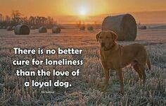 There is no better cure for loneliness than the love of a loyal dog