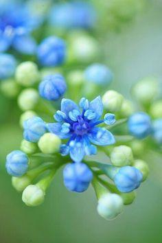 brotando Delicadas flores.