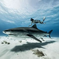 If diving the Bahamas wasnt previously on your radar these 10 images shot by @PerrinJames1 will have you re-thinking your next dive destination.  Check out the link in our bio  #PADI #freediving #freedivingphotos #shark #uwphotography http://ift.tt/2x3Q4KJ