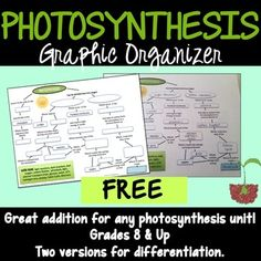 Free Photosynthesis Graphic Organizer by Biology Roots | Teachers Pay Teachers