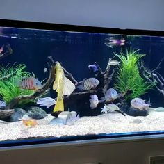 A Place to Learn All About Aquascape Tropical Freshwater Fish, Tropical Fish Aquarium, Freshwater Aquarium Fish, Aquarium Fish Tank, Marine Aquarium, Fish Tank Themes, Fish Aquarium Decorations, Fish Tank Terrarium, Cool Fish Tanks