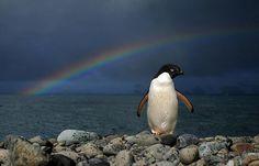 Under Antarctic Rainbow - South Shetlands Islands -