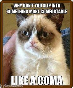 Haha, nice one grumpy cat :-) grumpy cat memes - Cat memes - kitty cat humor funny joke gato chat captions feline laugh photo Grumpy Cat Quotes, Funny Grumpy Cat Memes, Funny Animal Jokes, Funny Animal Pictures, Cute Funny Animals, Animal Memes, Funny Cute, Cute Cats, Funny Memes