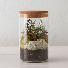 """Inspired by old-fashioned specimen jars, this cork-capped terrarium is ideal for humidity-loving plants.- Glass, cork- Wipe clean with damp cloth- Indoor use only- Drainage hole not included- Imported6.5""""H, 4"""" diameter"""