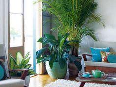 The best indoor plants