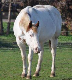 Ranch! Winchester Shotgun, Baby Horses, Horses For Sale, Palomino, Horse Love, Beautiful Horses, Painting, Animals, Ranch