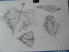 Drawing leafs