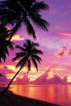 Tahitian Sunset Palm Trees Art Poster Print Posterrevolution Postercfm 24x36