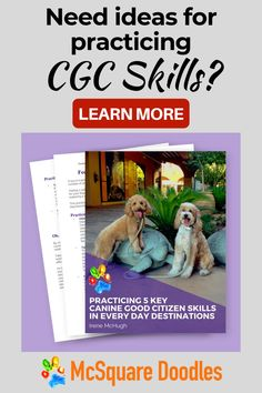 Need some new ideas for training your dog? If you're working toward your CGC title, click here for a list of 20 different places where you can practice skills like reactions to another dog, walking through crowds on a loose leash, meeting people calmly, and reactions to various distractions. #mcsquaredoodles #dogtraining #dogtrainingideas #therapydogtraining #therapydogs Therapy Dog Training, Therapy Dogs, Dog Training Tips, Training Schedule, Dog Status, Good Citizen, How To Train Your, Dog Walking, Walking Shoes