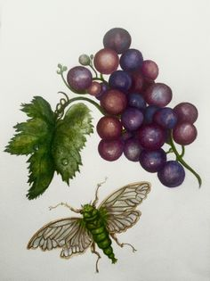 Fruit Forever | Carolyne Roehm