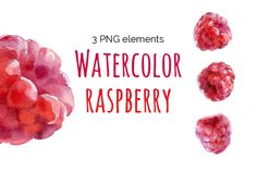 Watercolor raspberry - Illustrations - 1