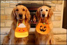 ParkerPup & Daisy. Hope everyone had a great Halloween.