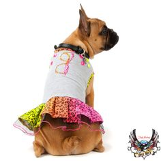 A cool Bret Michaels Pets Rock dress is just the thing for back-to-school fashion - PetSmart $3.97