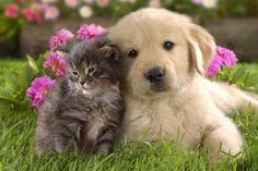 Filhote de Gato e Cachorro