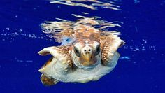 How researchers track the 'lost years' of baby sea turtles | MNN - Mother Nature Network