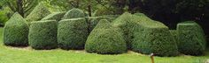 modern topiary - Google Search