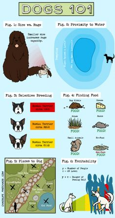 0c735f874b Dogs 101  INFOGRAPHIC   doginfographic Dogs 101