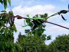 Grasshopper plant tie - just because