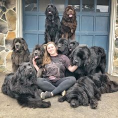 Pennsylvania dog mom has a house filled with 9 fluffy Newfoundlands, and on their way to being therapy dogs. Bear Dog Breed, Teddy Bear Dog, Huge Dogs, Giant Dogs, Chien Cane Corso, Le Plus Grand Chien, Friendly Dog Breeds, Newfoundland Puppies, Fluffy Dogs
