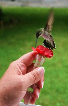 Hummingbird Feeder for Pennies -   This window feeder doubles as a hand-held hummingbird magnet. Find out how to make it today, just in time for hummingbird season!