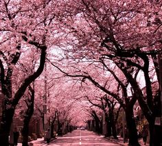 arbol de sakura