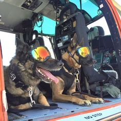 Sailor(right) and a friend getting a ride in a SHIELD helicopter! - Tap the pin for the most adorable pawtastic fur baby apparel! You'll love the dog clothes and cat clothes! <3