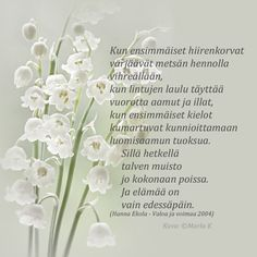 Kirjoitin kauneimman runoni iltaruskoon meren vaahtoon linnunlennon vanaan. Vain sinä ymmärsit sen. Ja tulit. (Maaria Leinonen) Finnish Words, Spring Words, Diy Presents, Lily Of The Valley, Peace Of Mind, Live Life, Wise Words, Texts, Poems