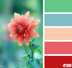 Color Palette for Daisy and Bokeh background Colour Pallette, Color Palate, Colour Schemes, Color Combinations, Blue Palette, Decoration Inspiration, Color Inspiration, Color Concept, Color Harmony