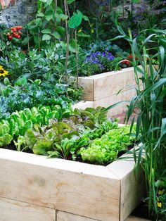 Raised Veggie Garden: Planning raised beds for your vegetable garden? Consider crafting them in such a way that they also can serve as seating. From HGTV.com's Garden Galleries