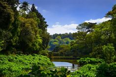 The sub-tropical Trebah Garden, which sits above the Helford river near Glendurgan, Falmouth. Photo by B.Nikkors.