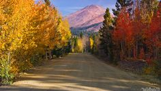 Country Road Of Color-  Boreas Pass cuts through the White River National Forest showing travelers the wonders of the Colorado Rocky mountains during Autumn with brilliantly colored Aspen trees