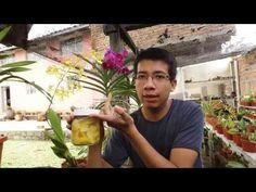 Solución enzimática casera para la floración de orquídeas || Orquiplanet - YouTube