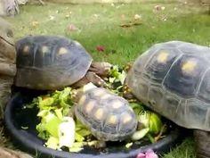Mundo Tortugas