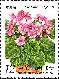 Saintpaulia, commonly known as African violet, is a genus of six species of herbaceous perennial flowering plants in the family Gesneriaceae, native to Tanzania and adjacent southeastern Kenya in eastern tropical Africa,