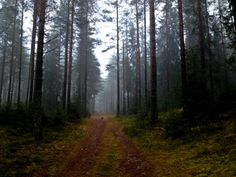 Suomalainen metsä - Lilou's Crush | Lily.