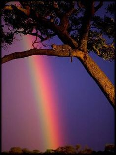 Anyplace where Rainbows shine...