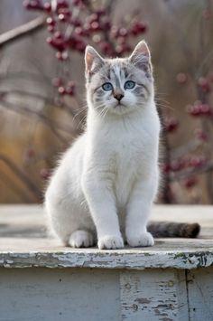 gatto bianco - gatti
