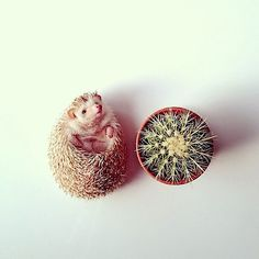 Photography: Darcy the flying hedgehog | dailybri