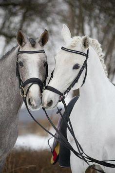 equitate, dont aggravate
