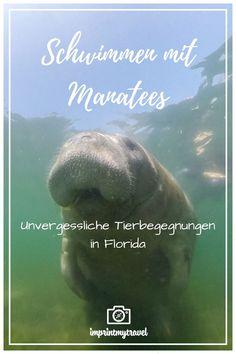 Crystal River Florida, Travel Destinations, Travel Tips, English Story, Viewing Wildlife, Florida Usa, Manatee, Travel Companies, East Coast