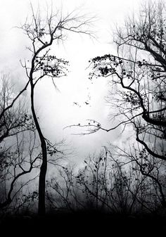 Cool black and white trees that form the image of a woman. Optical illusion or photo shopped?
