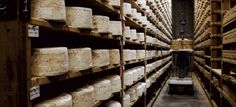 Cheese-Ripening Cellar Worker