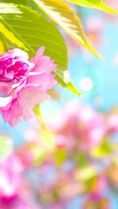 Cute Spring Wallpaper iPhone - Best iPhone Wallpaper