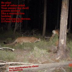 deer hunting with jesus essay