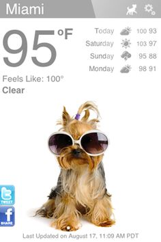 Weather Puppy - yes please!