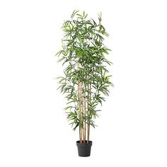 $60 Fake Bamboo.    A live plant would be cheaper, but you'd have to water it, and eventually you'd kill it.