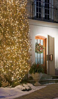 Exterior Christmas Tree Lights